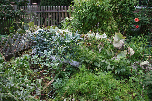 overgrown_garden