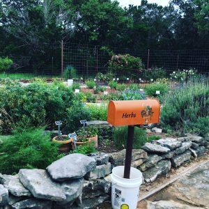 Comal MG Herb Garden