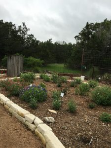 Comal MG Herb & Native Garden