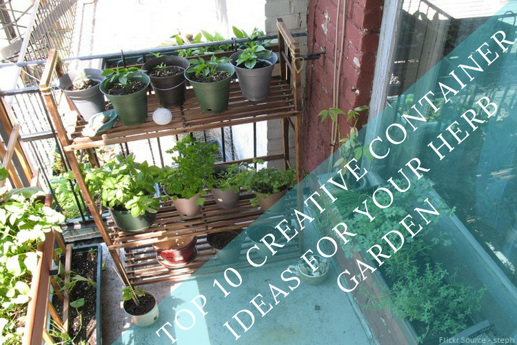 Guest Post- Creative Container Ideas