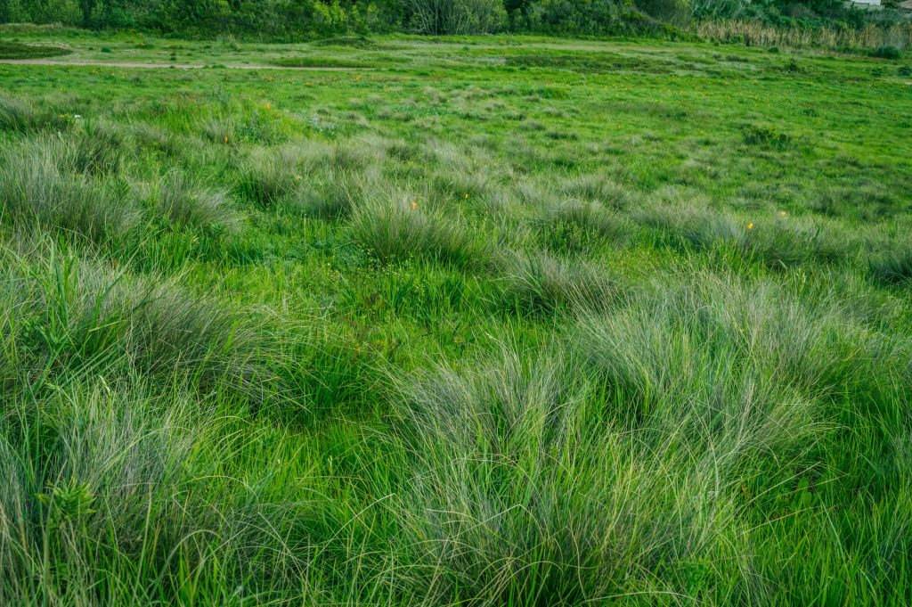 Guest Post The Most Common Types Of Grasses For Your Yard