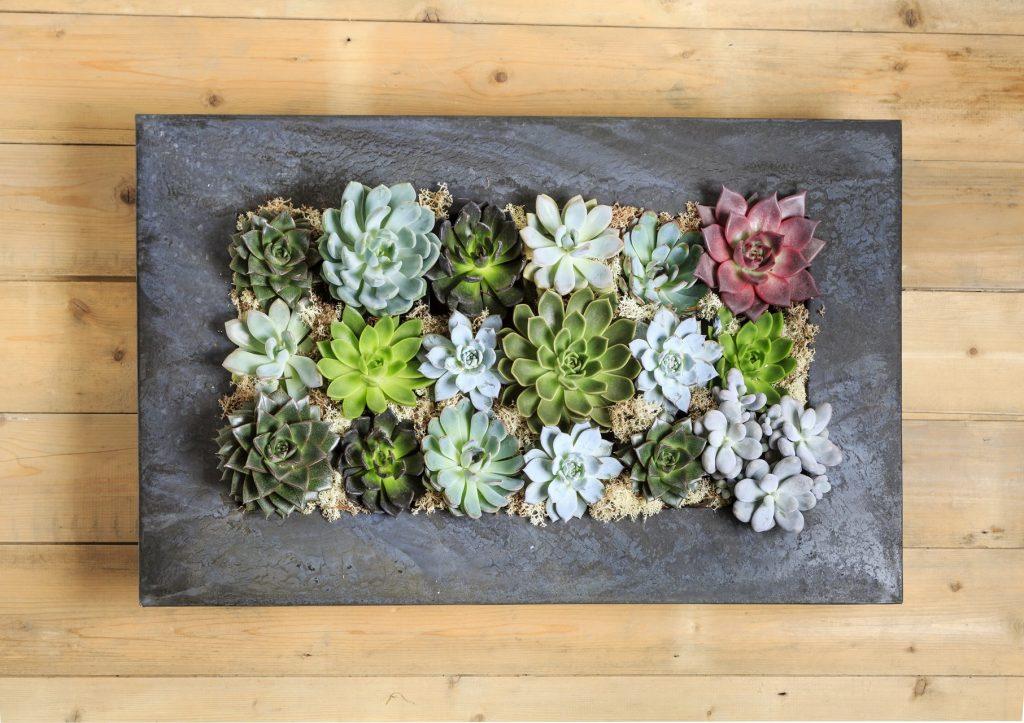 Guest Post Creative Ways To Make A Succulent Wall Garden