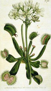 Guest Post- 5 Easy Predator Plants